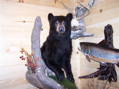 Small Home Office Design bear mounts butler s taxidermy
