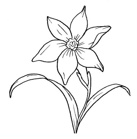 edelweiss flower coloring page free edelweiss coloring pages