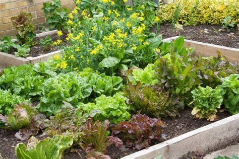 small vegetable garden plans layouts   farmers