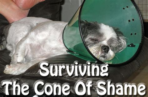 cone of shame surviving the cone of shame success just clicks
