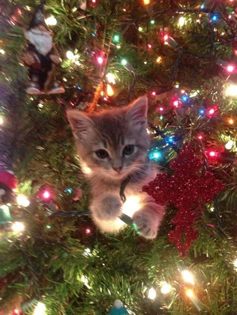 cat christmas christmas tree colors cute image