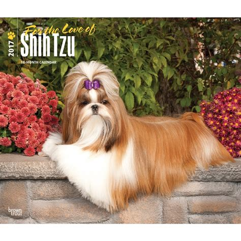 shih tzu calendar 2017 for the of shih tzu 2017 wall calendar 9781465080660 calendars