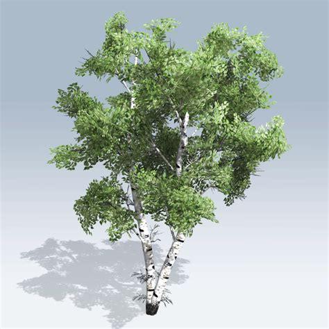 white tree european white birch v6 speedtree