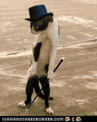 download gambar format gif lucu kumpulan gambar gif lucu edisi kucing