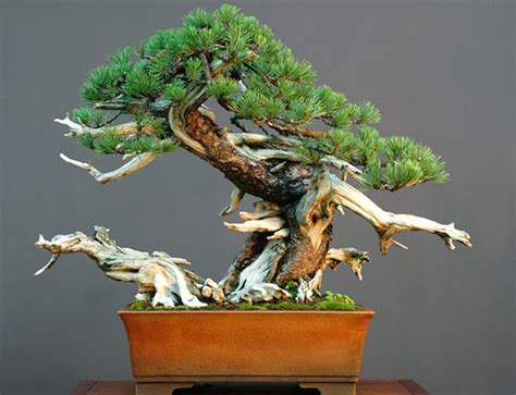 bonsai for beginners gardens and bonsais fly me to japan