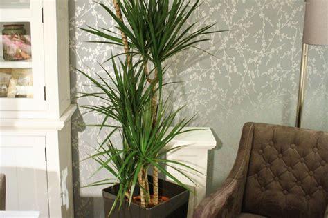 luftreinigende pflanzen schlafzimmer luftreinigende pflanzen hornbach