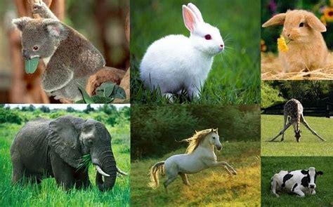 imagenes de animales rumiantes animales herb 237 voros informaci 243 n lista ejemplos y