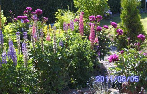 mein schöner garten ideen zum nachpflanzen staudenbeete gestalten staudenbeete gestalten farb und