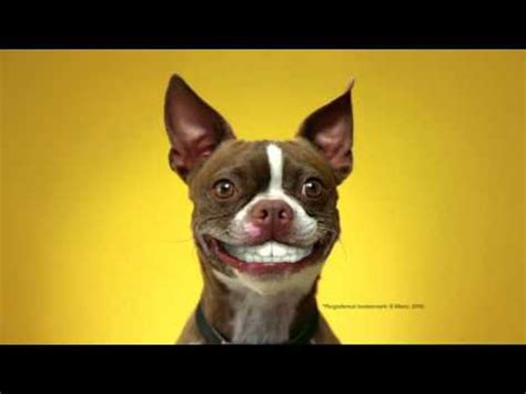 dentastix puppy doggie dentures australian pedigree dentastix tv commercial 2011
