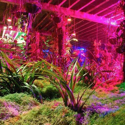 led light grow plants herbs vegetables grass