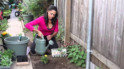 Homemade Eggshell Plant Fertilizer The Chef S Garden How To Fertilize Vegetable Garden