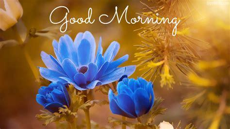 wallpaper flower morning 5 beautiful good morning hd wallpapers bighdwalls