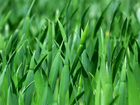 wallpaper daun resolusi tinggi gambar alam menanam halaman rumput padang rumput