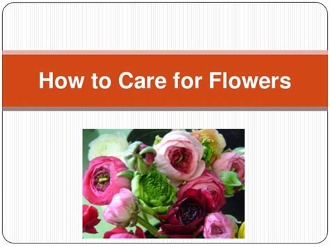 how to care for flowers speaking roses