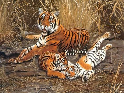 google images tiger tiger pictures google search tigers pinterest