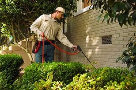Eliminate Mosquitoes In Backyard by How To Rid Your Yard Of Mosquitoes Tips That Really Work
