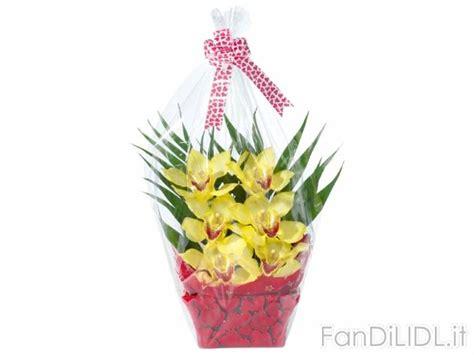 fiori lidl orchidea 6 fiori fiori fan di lidl