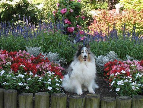 Sheltie Nation Butterfly Kisses Beech Creek Botanical Gardens