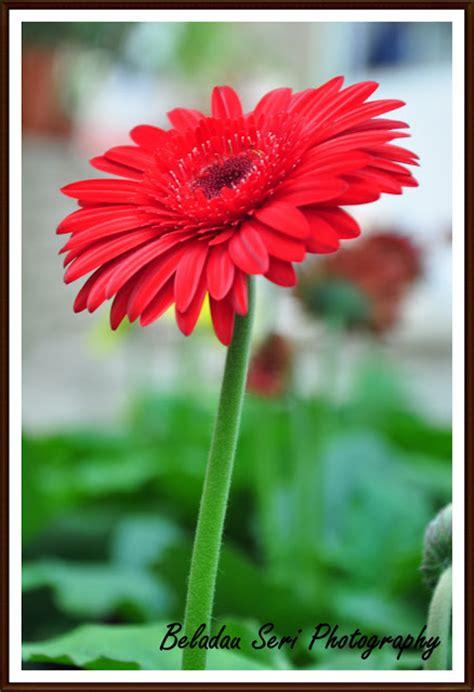 Box Bunga Jinjing Seri 5 beladau seri warna warni bunga malaysia