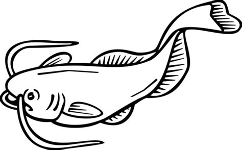 What Does Catfish Use To Find Catfish Drawings Pictures Clipart Best