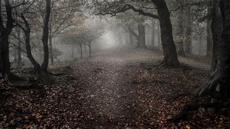 imagenes de paisajes triztes wallpaper forest trees leaves fall fog sadness