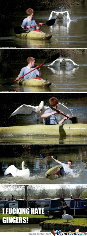 swan boats gif swan vs boat by liamotee11 meme center