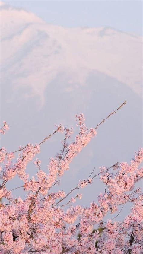 sakura wallpaper tumblr aesthetic backgrounds pink