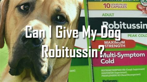 my ate a cough drop can i give my robitussin pet consider