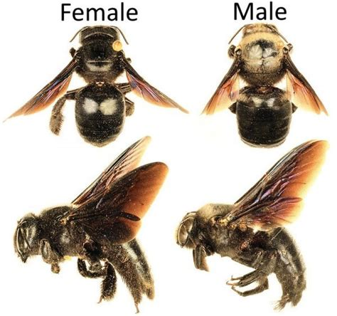 carpenter bee house how to get rid of carpenter bees inside and outside of