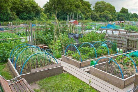 fabulous vegetable garden design ideas