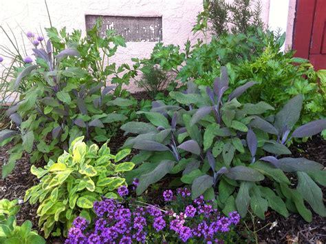 herb garden robin s nest herb garden revisited
