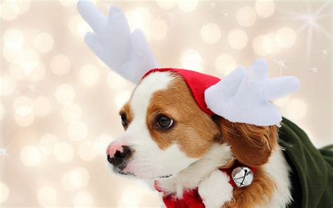 christmas wallpaper with dogs cute christmas animal with quotes gallery quotesgram