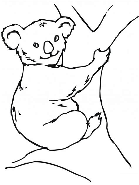 Free Printable Koala Coloring Pages For Kids Koala Template