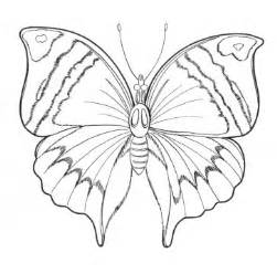 Butterfly Coloring Pages  Learn To sketch template
