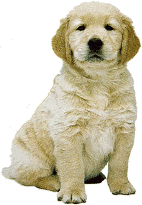 real puppy clipart