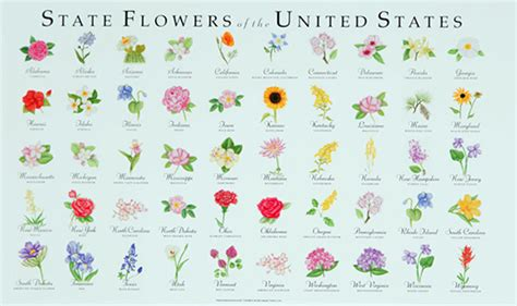 list of state flowers 28 state flower list state flowers list of the