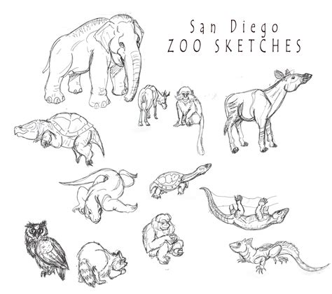 Coloring Pages San Diego Zoo | san diego zoo sketches by shinragod on deviantart