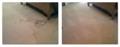 cleaning jute rugs pet stain pet stain odor services cincinnati carpet cleaning