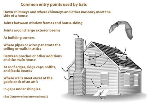 mn animal removal bat