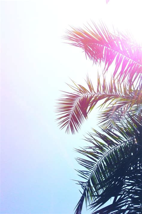 summer vibes palm trees hd 760 best iphone wallpaper images on pinterest wallpaper