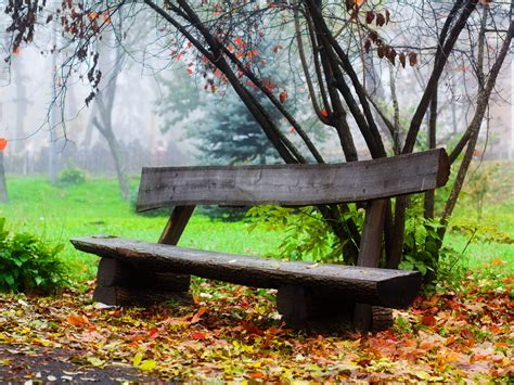 fall bench sleeping prita a single lonely bench