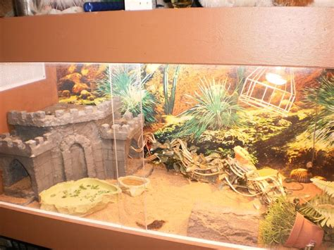 Bearded Tank Decor by 17 Best Images About Bearded Dragons Habitats And Decor