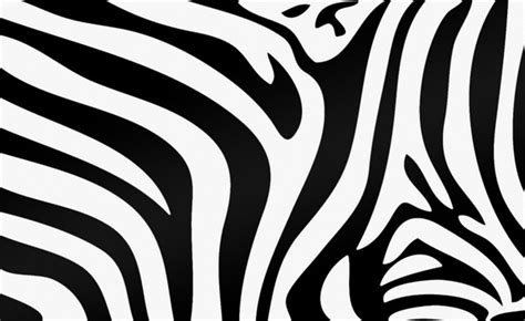 zebra texture  wallpaper