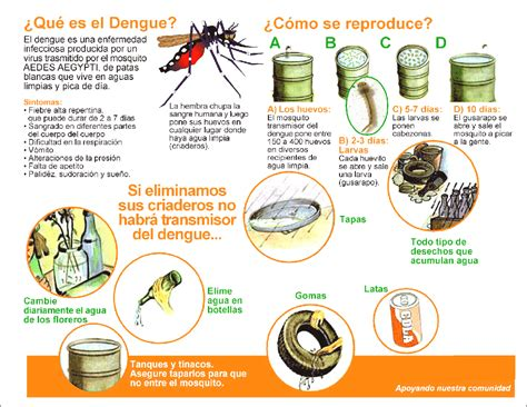 imagenes de vectores que transmiten enfermedades ya circula el virus del dengue en argentina taringa