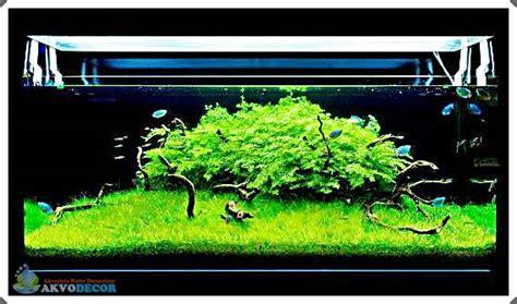 Jual Aquascape Jakarta Jual jual aquascape di bekasi