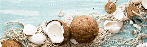 can dogs eat coconut can dogs eat coconut nutrition guide