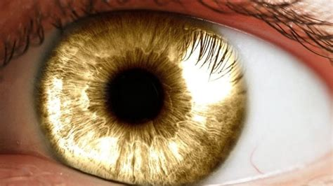 gold eye color learn about the origin of in