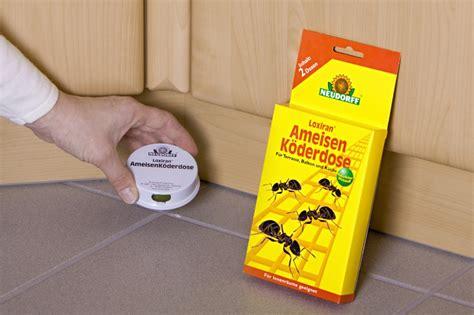 Gelbe Ameisen Im Garten 3820 by Ameisen Bek 228 Mpfen Die N 252 Tzlichen Sch 228 Dlinge Allgemein