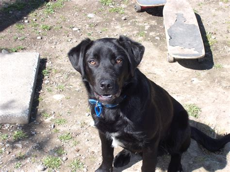 black dog meet duncan a black dog infinite sadness or hope