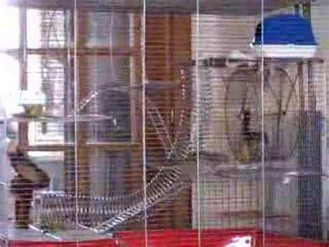 gabbia per scoiattoli giapponesi tamia sulla rota 2